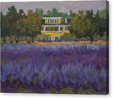 Lavender Farm On Vashon Island Canvas Print by Diane McClary