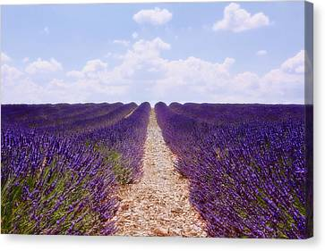 Lavender Field Canvas Print by Claudia Moeckel