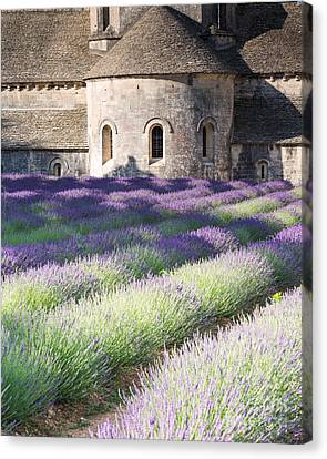 Lavender Field In Front Of Senanque Abbey - Provence - France Canvas Print