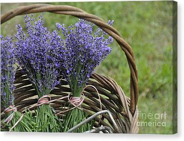 Lavender In A Basket Canvas Print