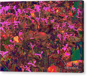 Lavender In Pink Canvas Print by Raphael OLeary