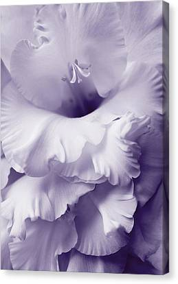 Lavender Lace Gladiola Flower Canvas Print by Jennie Marie Schell