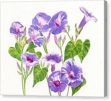 Morning Glories Canvas Print - Lavender Morning Glory Flowers by Sharon Freeman