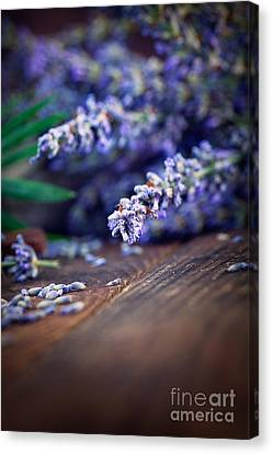 Lavender Canvas Print by Mythja  Photography