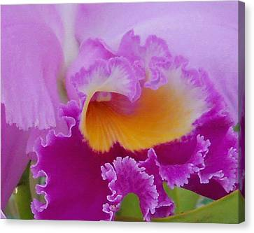 Canvas Print featuring the photograph Lavender Orchid by Aimee L Maher Photography and Art Visit ALMGallerydotcom