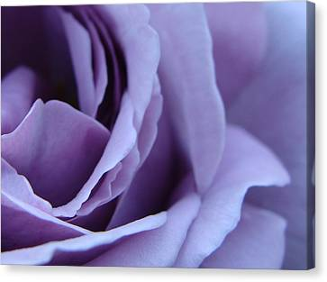Lavender Rose Abstract Canvas Print by Brian Jones