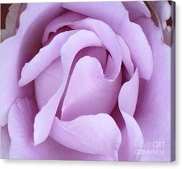 Lavender Rose Blossom 2 Canvas Print