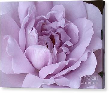 Lavender Rose Chaos Canvas Print