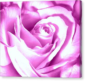 Lavender Rose  Canvas Print by Janine Riley