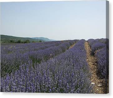 Canvas Print featuring the photograph Lavender Sky by Pema Hou