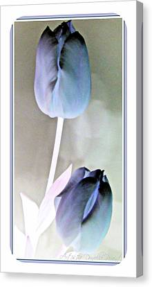 Lavender Tulips Canvas Print by Danielle  Parent