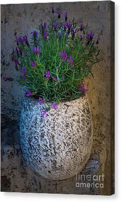 Lavender Vase Canvas Print by Inge Johnsson