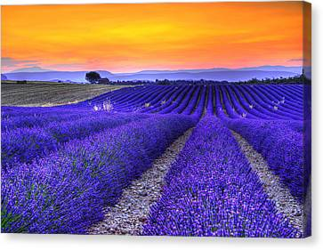 South Of France Canvas Print - Lavender's Sunset by Midori Chan