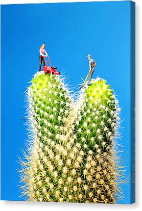 Lawn Mowing On Cactus Canvas Print by Paul Ge
