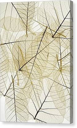 Layered Leaves Canvas Print by Kelly Redinger