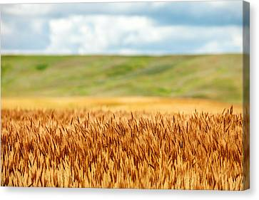 Layers Of Grain Canvas Print by Todd Klassy