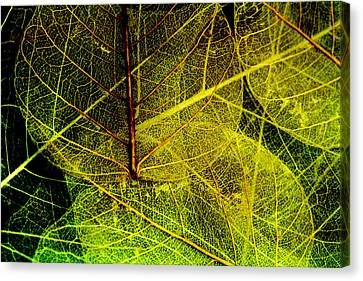 Layers Of Leaves Canvas Print by Bonnie Bruno