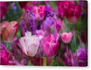 Layers Of Tulips Canvas Print