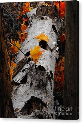 Laying Birch Canvas Print
