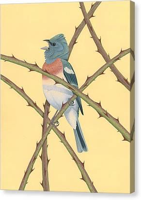 Lazuli Bunting Canvas Print by Nathan Marcy