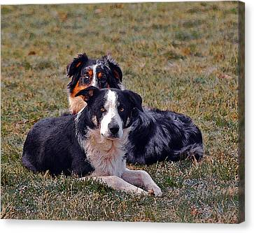 Lazy Canines Canvas Print by Brian Graybill