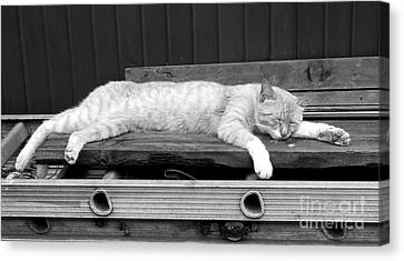 Canvas Print featuring the photograph Lazy Cat by Andrea Anderegg