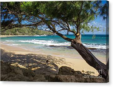 Lazy Day At The Beach Canvas Print by Suzanne Luft
