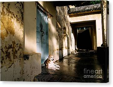 Dog At Door Canvas Print - Lazy Dog Resting In The Afternoon by Eldad Carin