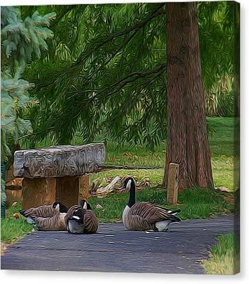 Lazy Ducks Canvas Print by Julie Grace
