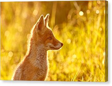 Kit Fox Canvas Print - Le P'tit Renard by Roeselien Raimond
