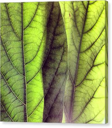 Abstract Canvas Print - Leaf Abstract by Christy Beckwith