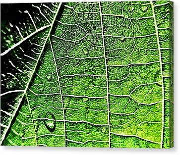 Leaf Abstract - Macro Photography Canvas Print by Marianna Mills