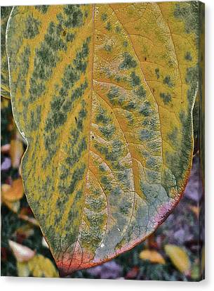 Leaf After Rain Canvas Print by Bill Owen