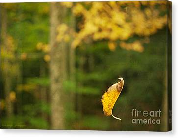 Leaf Aloft Canvas Print