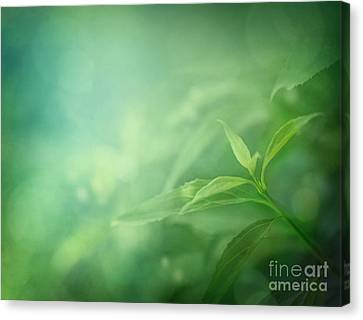 Npetolas Canvas Print - Leaf Background by Mythja  Photography