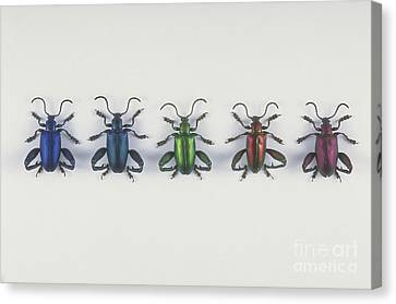 Leaf Beetles Canvas Print by Barbara Strnadova