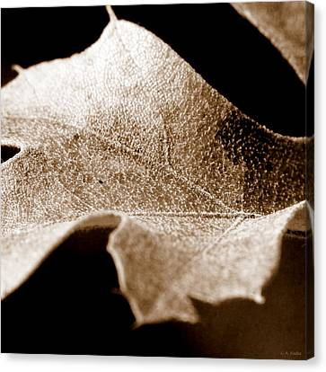 Canvas Print featuring the photograph Leaf Collage 1 by Lauren Radke