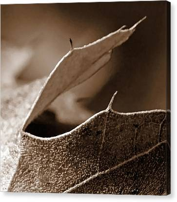 Canvas Print featuring the photograph Leaf Collage 2 by Lauren Radke