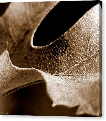 Canvas Print featuring the photograph Leaf Collage 3 by Lauren Radke