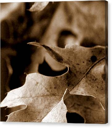 Canvas Print featuring the photograph Leaf Collage 4 by Lauren Radke
