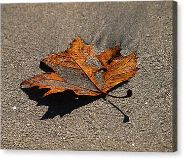 Canvas Print featuring the photograph Leaf Composed by Joe Schofield
