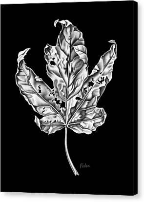 Leaf Canvas Print by David Fedan