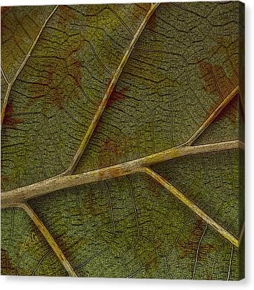 Leaf Design II Canvas Print by Ben and Raisa Gertsberg