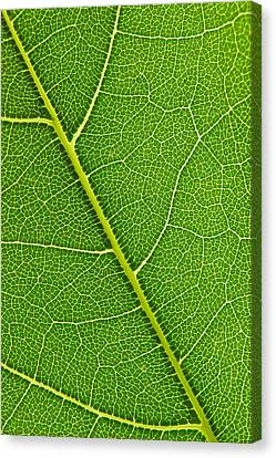 Leaf Detail Canvas Print by Carsten Reisinger