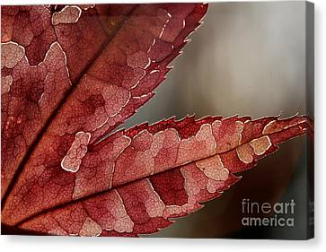 Canvas Print featuring the photograph Leaf Detail by Kenny Glotfelty