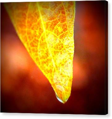 Canvas Print featuring the photograph Leaf Drop by Candice Trimble