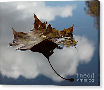 Leaf In Sky Canvas Print