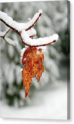 Canvas Print featuring the photograph Leaf In Winter by Barbara West