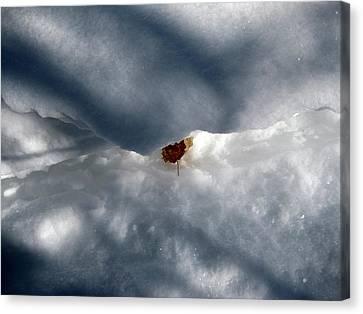 Leaf In Winter Landscape Canvas Print by Carolyn Reinhart
