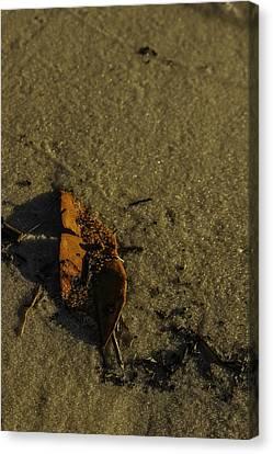 Leaf Canvas Print by Jennifer Burley